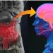 Nuestro segundo cerebro